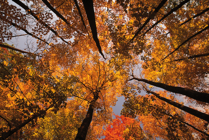 Best Time To Book A 2017 Fall Foliage Tour