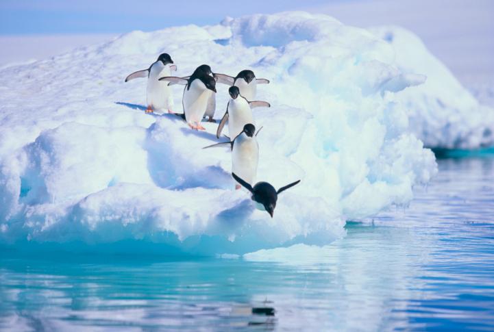 Antarctica Cruise Misconceptions