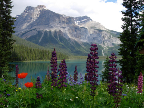 What To Do In Canada Based On The Season