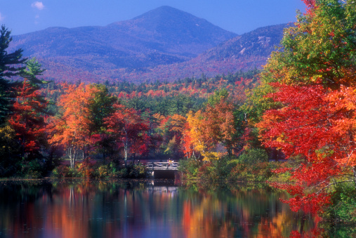 How Fall Foliage Is Good For You