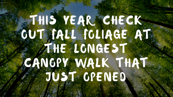 This Year, Check Out Fall Foliage At The Longest Canopy Walk That Just Opened