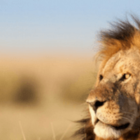 Escorted Africa Tours