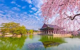 Tailor Made South Korea Culture and Cuisine