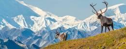 Wild Plus Wonderful Alaska