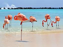 3-Nights Oranjestad, Aruba, Renaissance Aruba Resort & Casino